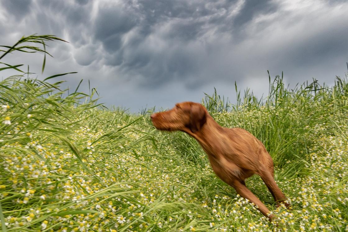 Mammatus felhőzet bemuzdult kutyával