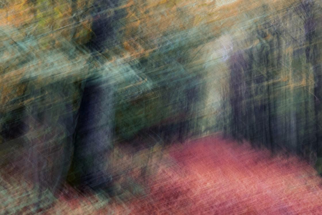 Szuloki erdő, impresszió