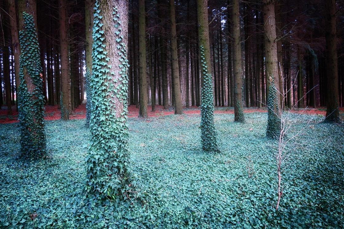 Miklósfa • parkerdő