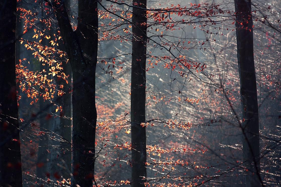 Szuloki erdő novemberi fényben 1