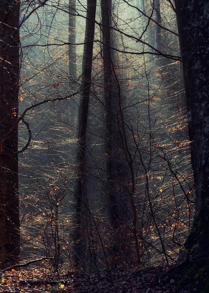 Szuloki erdő novemberi fényben 2