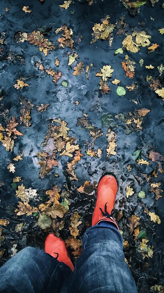 Bajcsa, őszi erdőtalaj